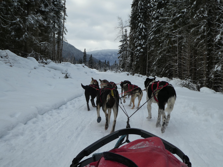Op Elandenjacht en sleeën in Winterwonderland