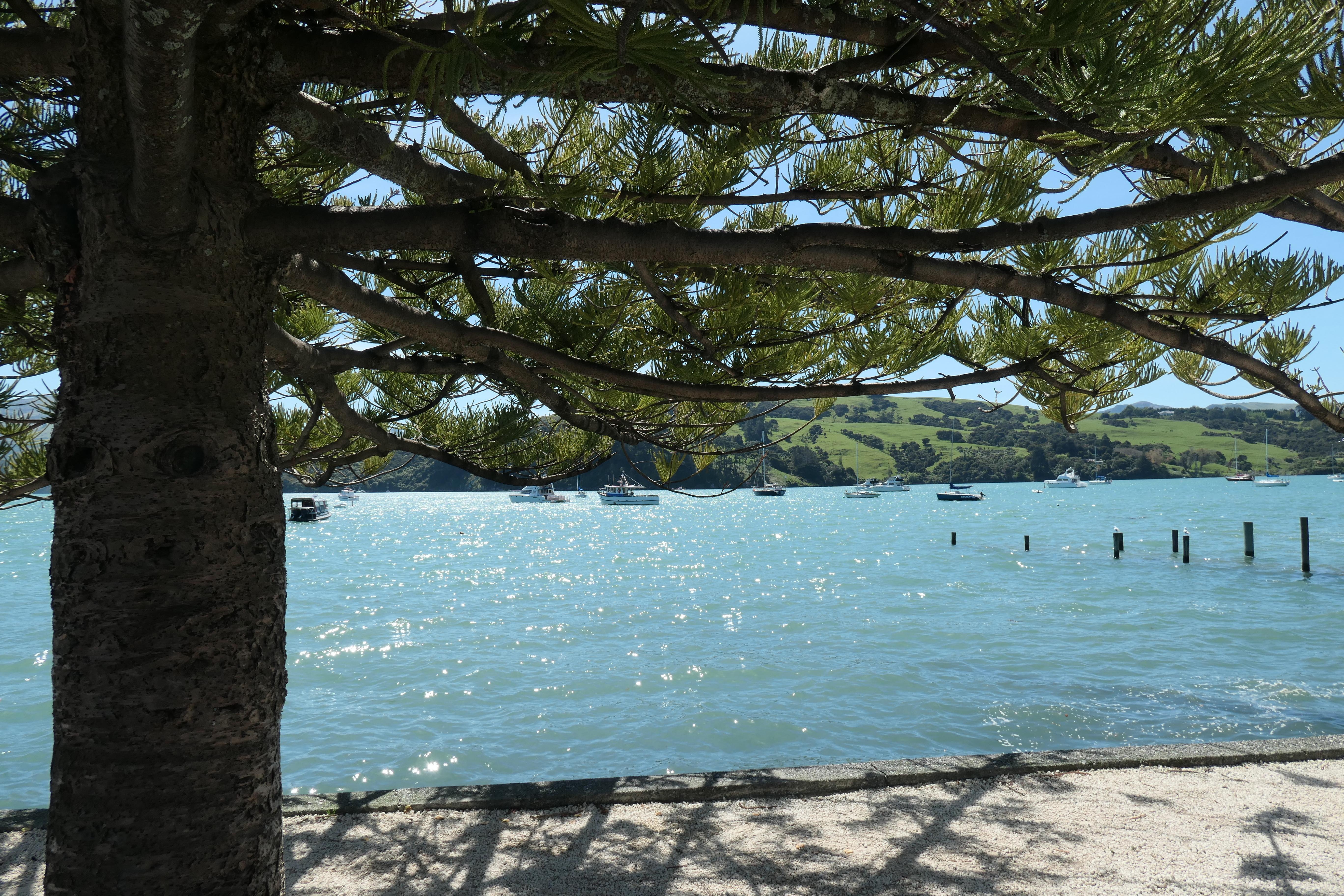 Over Ōtautahi, the all blacks en een mediteraan gevoel